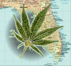 Canadian Medical Marijuana Company Based in Florida Began Public Trading Last Week
