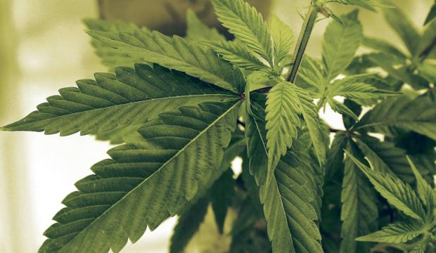 Orange County Votes to Allow Medical Marijuana