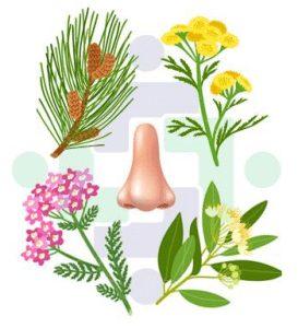Terpenes of Different Plants