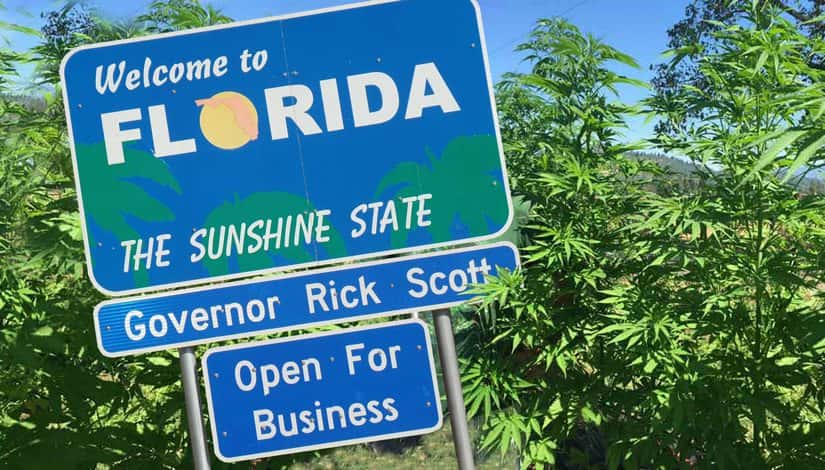 Industrial Hemp to Replace Devastated Citrus Industry in Florida?