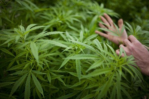 Florida Health Department Criticized for Not Adhering to New Medical Marijuana Law